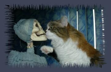 Flauschi gibt Jack Bones Knuddelnasis!